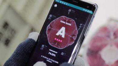 تصویر از توسعه اپلیکیشن Tuna Scope برای ارزیابی ماهی تن با هوش مصنوعی