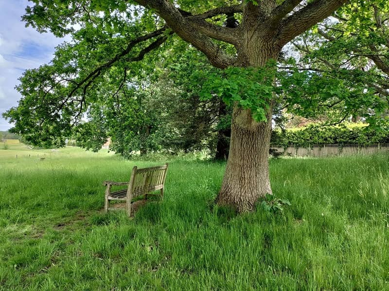 oneplus nord ce tree seat - بررسی گوشی وان پلاس نورد CE 5G
